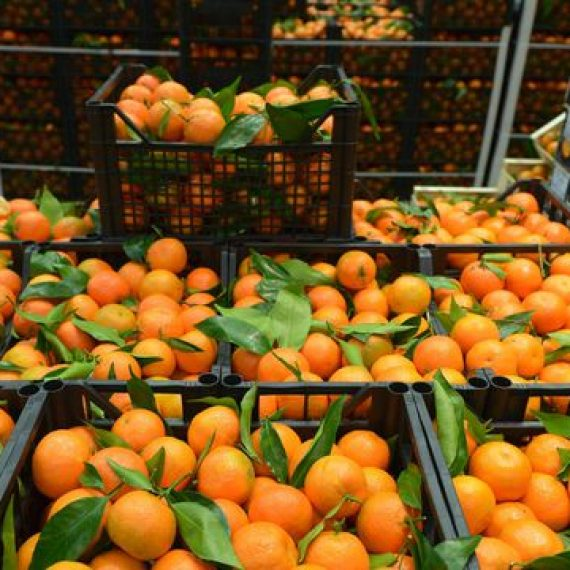"<a href=""http://legumefructeoradea.ro/produs/clementine/"">Clementine</a>"